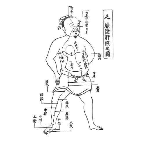 足の厥陰肝経の図